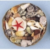 "Shells Assorted In Basket 8"" Diameter"
